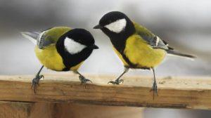 Observación de aves en su entorno